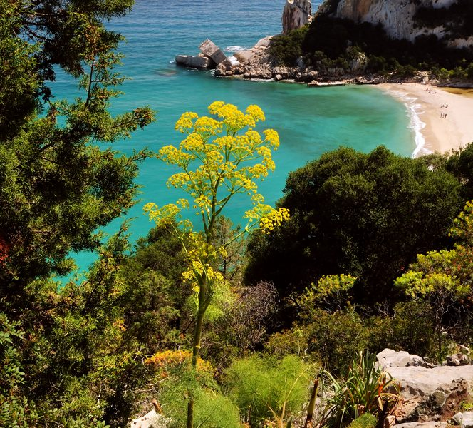 Sardinië kustlijn bloemen rotsen