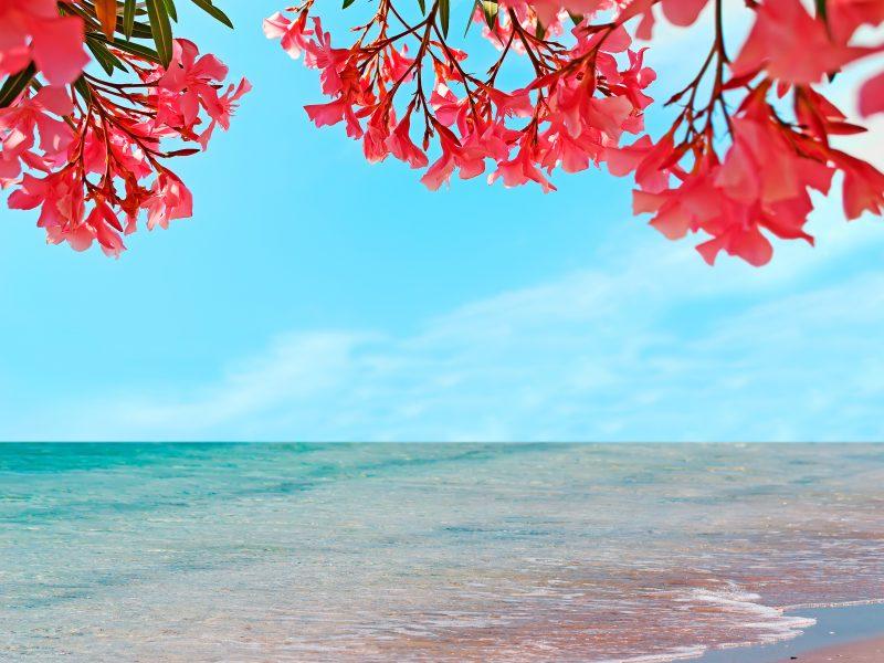 Sardinië zee bloemen