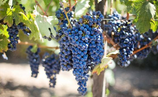 Genieten van unieke wijnen op Sardinië