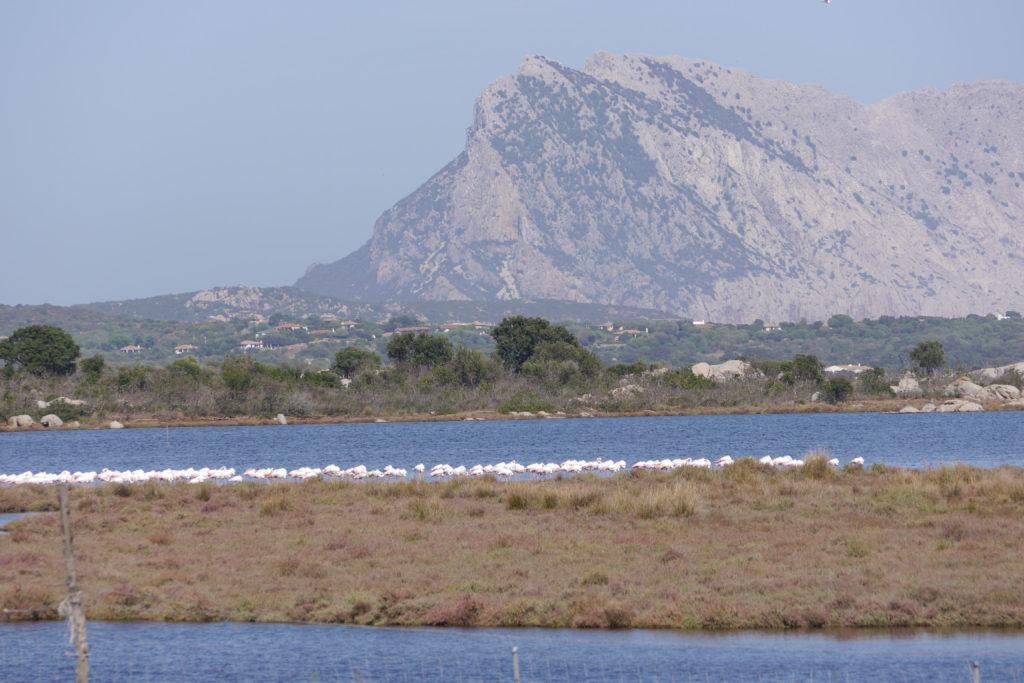 Tavolara Sardinië