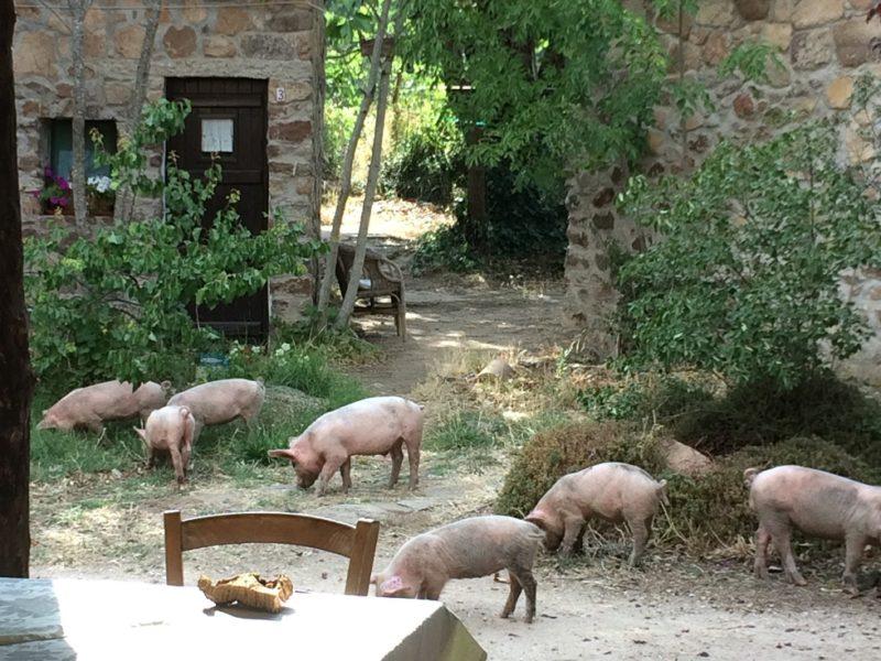 boerderij sardinie