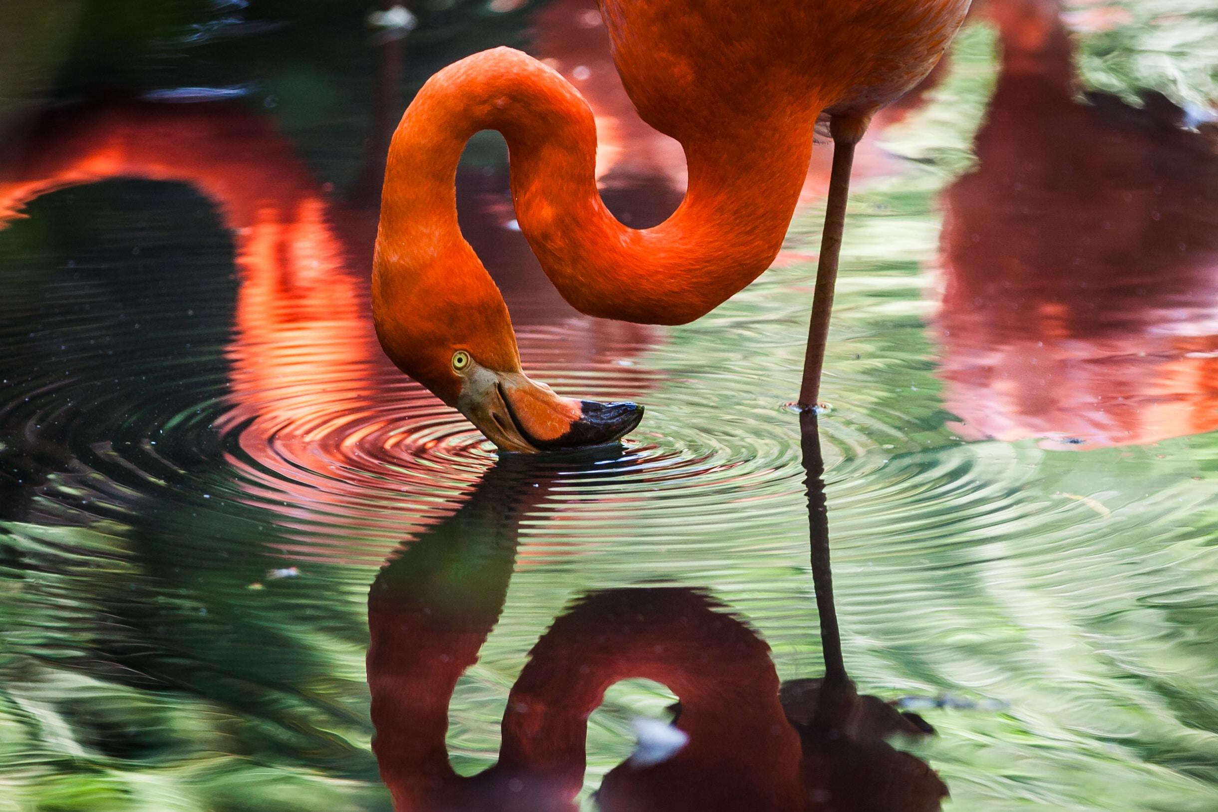 Flamingo's spotten op schiereiland Sinis
